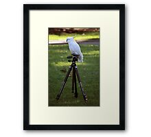 Birds Just Want to Have Fun Framed Print