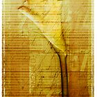 Faded Memories by Rene Hales