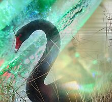 The ugly duckling has turned in to a BLACK swan by MotherOfPearl