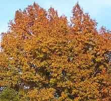 Pretty Tree by angelslight
