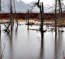 Rainy Day in Alaska by Betterphotoart