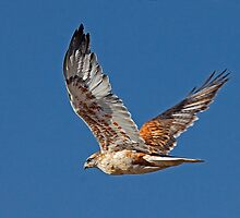 Light Morph Ferruginous Hawk by Marvin Collins