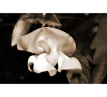 Snail Flower Photographic Print