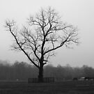 Alone by capizzi