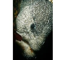 Wolf Eel Photographic Print