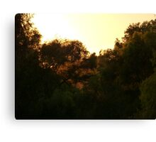 trees in the light of a sunset - arboles en la luz de una puesta del sol Canvas Print
