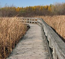 Boardwalk by Josette21