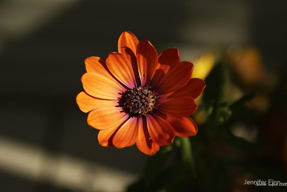 Orange bliss by Jennifer Finn
