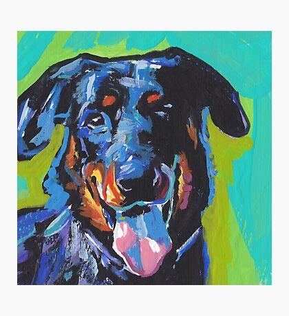 Beauceron Dog Bright colorful pop dog art Photographic Print