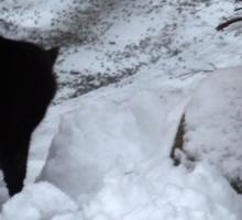 Cold Cat Sticker