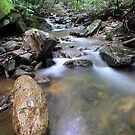 By a Summer Stream by Tibby Steedly