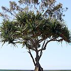 Pandanus Palm by the Beach by caz60B