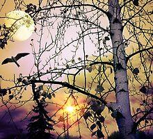 Aspen Moon by digitalmidge