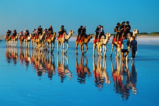 camels on cable beach by wildplaces