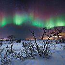 Northern Lights - creative editing by Frank Olsen