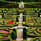 Jardin d&#x27;Amour - Villandry by Alison Cornford-Matheson