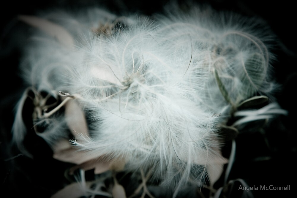 A bit of Fluff by Angela McConnell