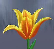 Tulip by pressurus