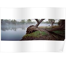 Fallen Tree.Swan River Guildford. Poster