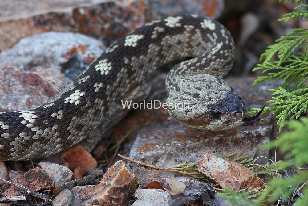 A Beautiful Viper by William C. Gladish