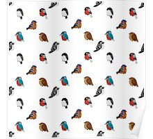 Beautifully Designed Bird Breed Images Poster