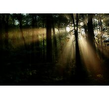 Forest Rays Photographic Print
