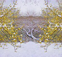 Snow in springtime by Anthony Jalandoni