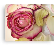 White Pink rose with petals 3 Canvas Print