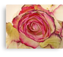 White Pink rose with petals 4 Canvas Print