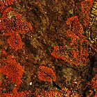 Orange and Yellow Lichen by John Kroetch
