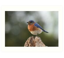 It's a Bluebird Art Print