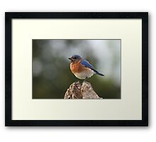 It's a Bluebird Framed Print