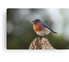 It's a Bluebird Canvas Print