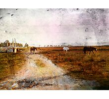 Out On The Plains Photographic Print