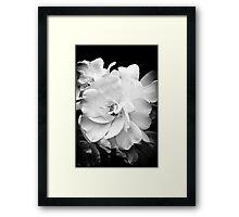 Dove White Framed Print