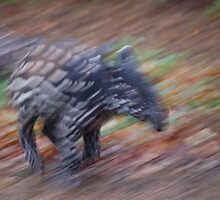 Malayan Tapir Baby on the Run !!! by cml16744