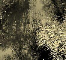 Nature  by strangebeauty