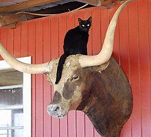Cat on a Steer by amyboddie
