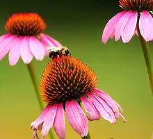 Purple Cone Flower and a Friend by Eric Abernethy