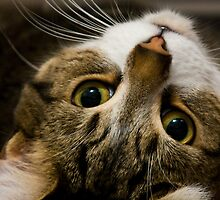 What? by dozzie