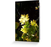 Autumn Sun Rays #6 Greeting Card