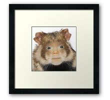 Laicey the Hamster Framed Print
