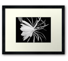 Queen of the Night (B&W) Framed Print