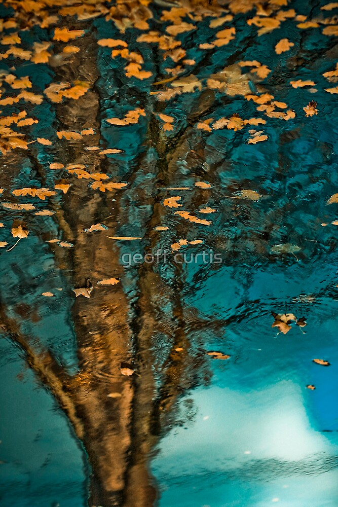 Golden Leaves by geoff curtis