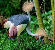 The Two Headed Bird, Iguazu, Brazil by acaldwell