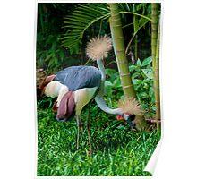The Two Headed Bird, Iguazu, Brazil Poster