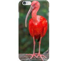 Bird, Iguazu, Brazil iPhone Case/Skin