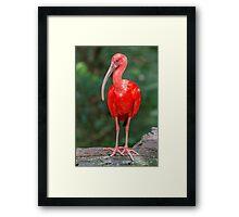 Bird, Iguazu, Brazil Framed Print