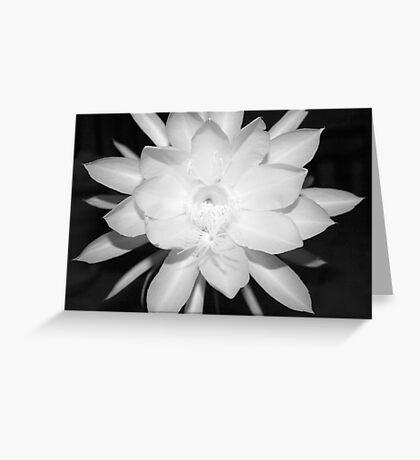 Night Blooming Cereus (B&W) Greeting Card