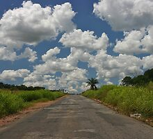tropical road by jean-jacques bernard